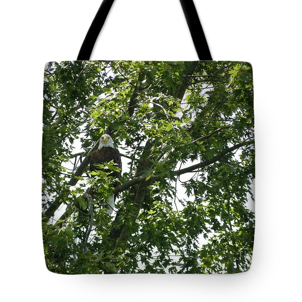 Face The Eagle Tote Bag by Donald C Morgan