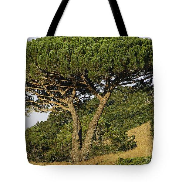 Fairfax Beauty Tote Bag