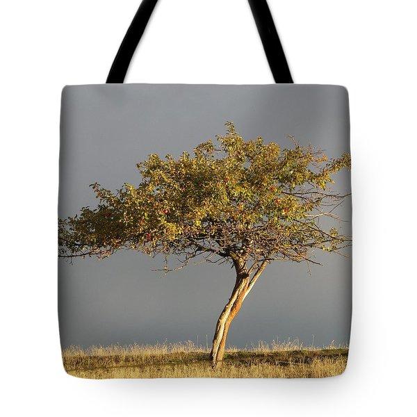Fall At The Crabapple Tree Tote Bag
