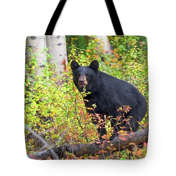 Fall Bear Tote Bag