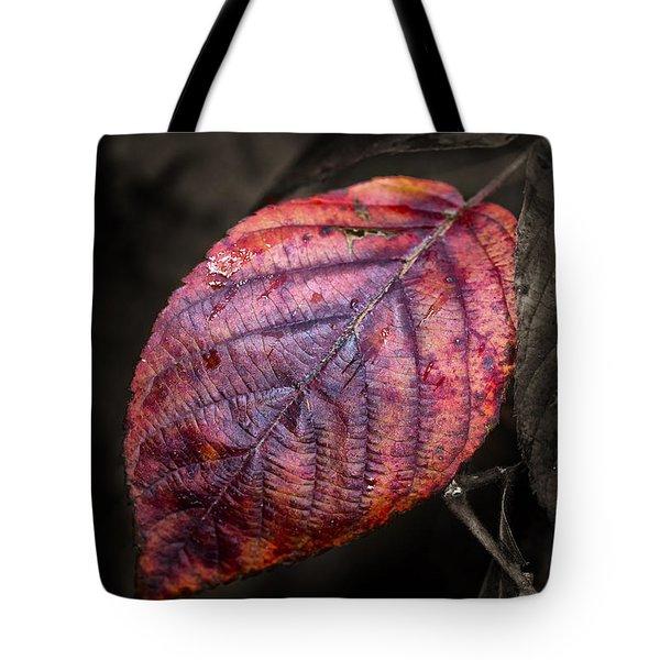 Fall Beech Leaf Tote Bag
