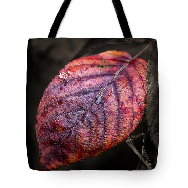Fall Beech Leaf Tote Bag