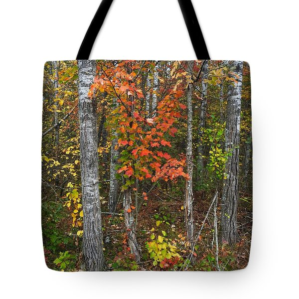 Fall Color At Gladwin 4543 Tote Bag