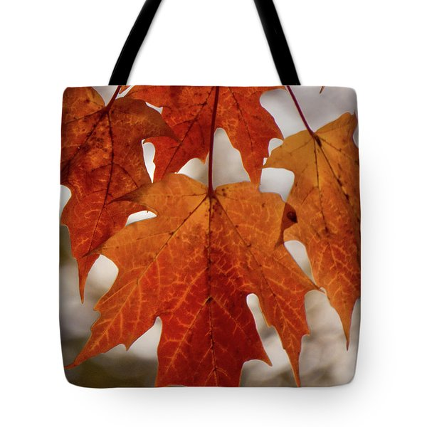 Tote Bag featuring the photograph Fall Foliage by Kimberly Mackowski