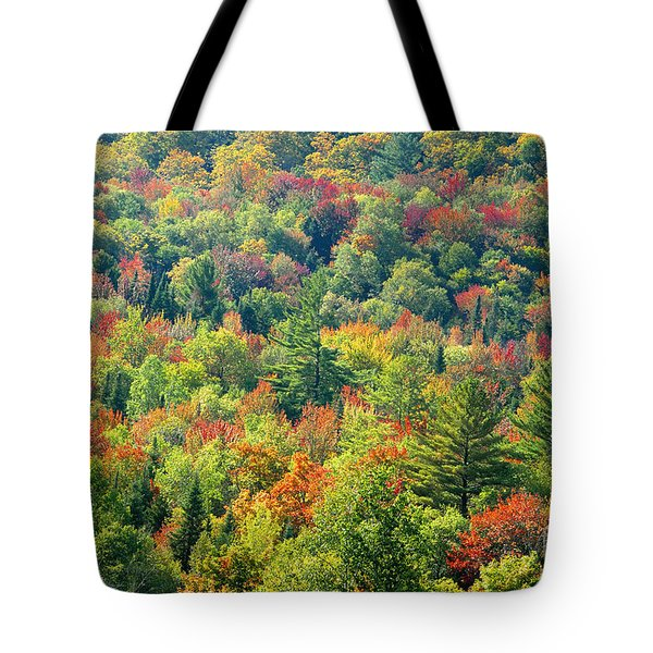 Fall Forest Tote Bag by David Lee Thompson