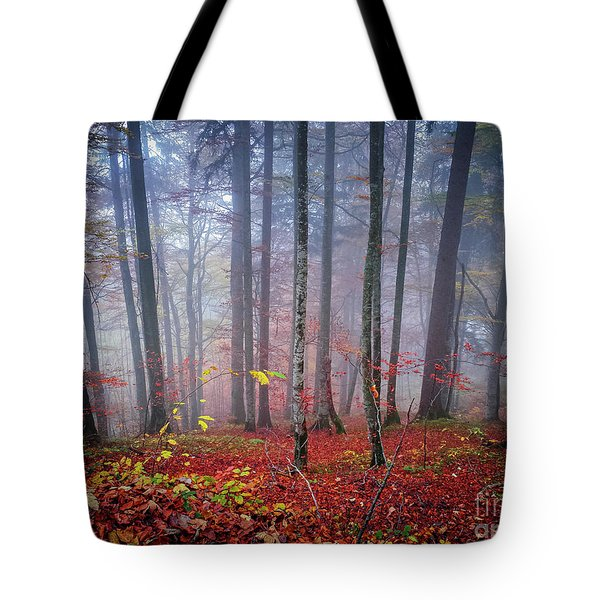 Tote Bag featuring the photograph Fall Forest In Fog by Elena Elisseeva