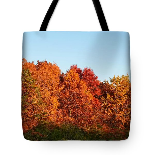Tote Bag featuring the photograph Fall Forest by Nikki McInnes