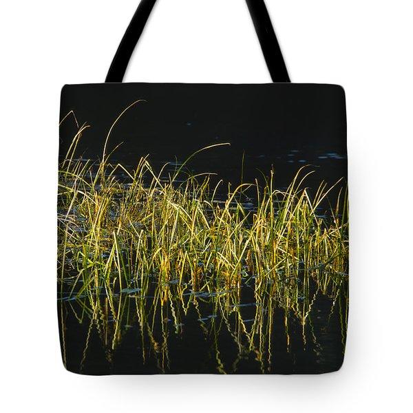 Fall Grasses - Snake River Tote Bag by Sandra Bronstein