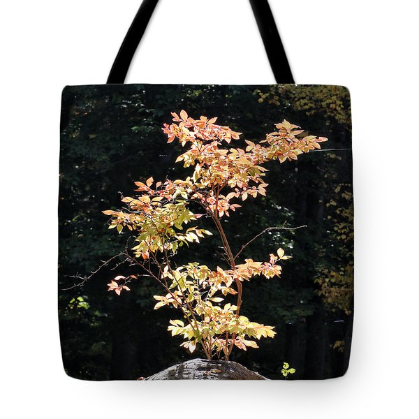 Tote Bag featuring the photograph Fall Illumination by William Selander