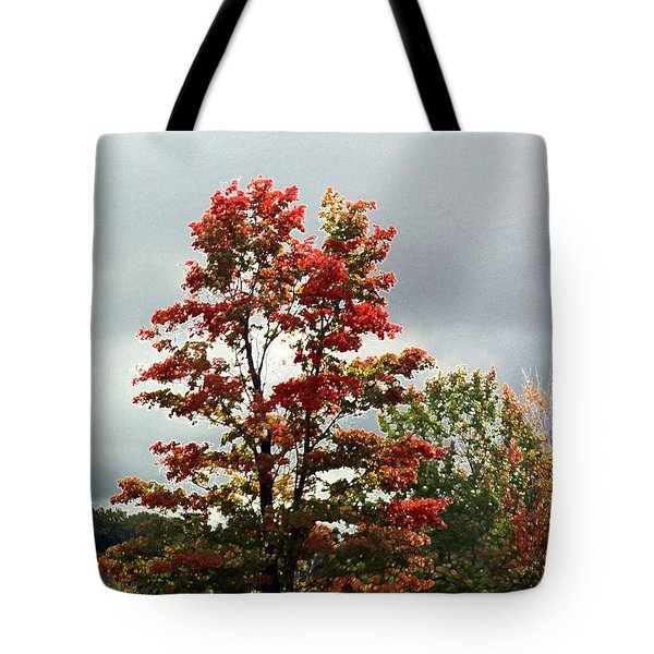 Tote Bag featuring the photograph Fall In Michigan Tree by Ellen Barron O'Reilly