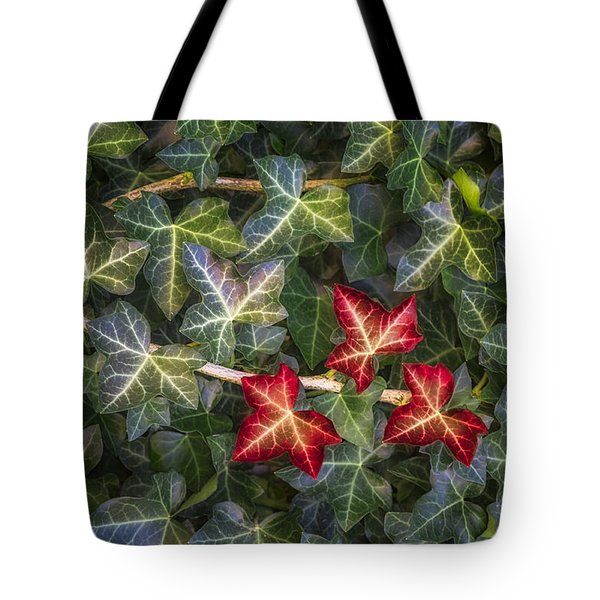 Tote Bag featuring the photograph Fall Ivy Leaves by Adam Romanowicz