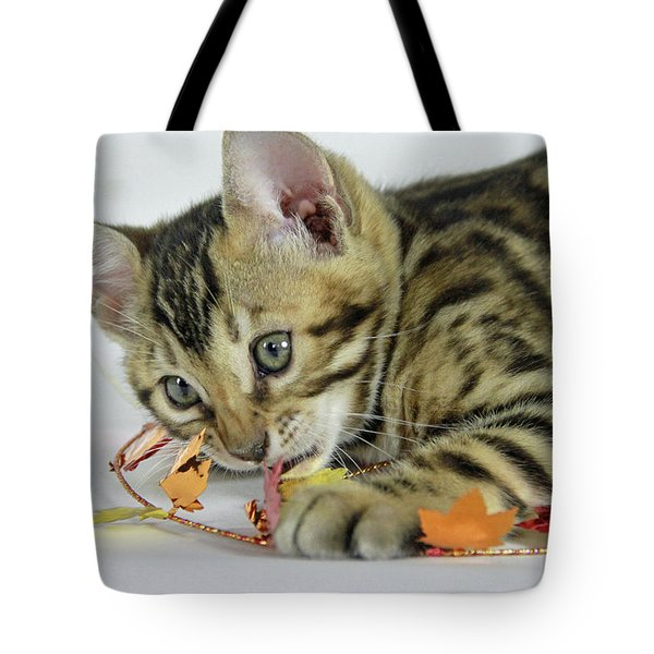 Fall Kitten Tote Bag by Shoal Hollingsworth