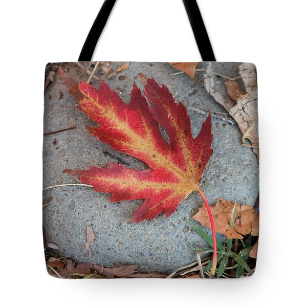 Fall Leaf  Tote Bag by Christy Pooschke