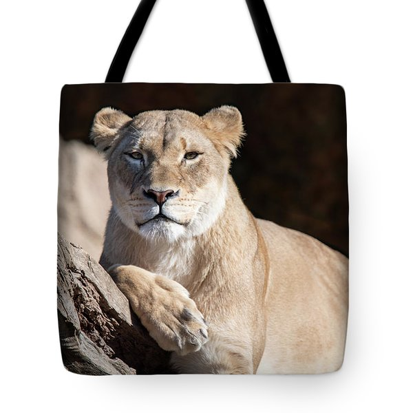 Fall Lioness Tote Bag