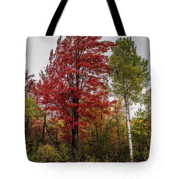 Tote Bag featuring the photograph Fall Maple by Paul Freidlund