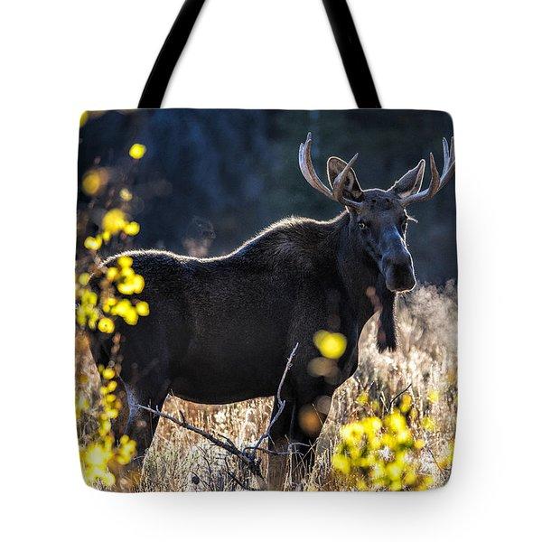 Fall Moose Tote Bag
