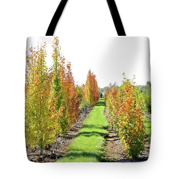 Fall On The Tree Farm Tote Bag