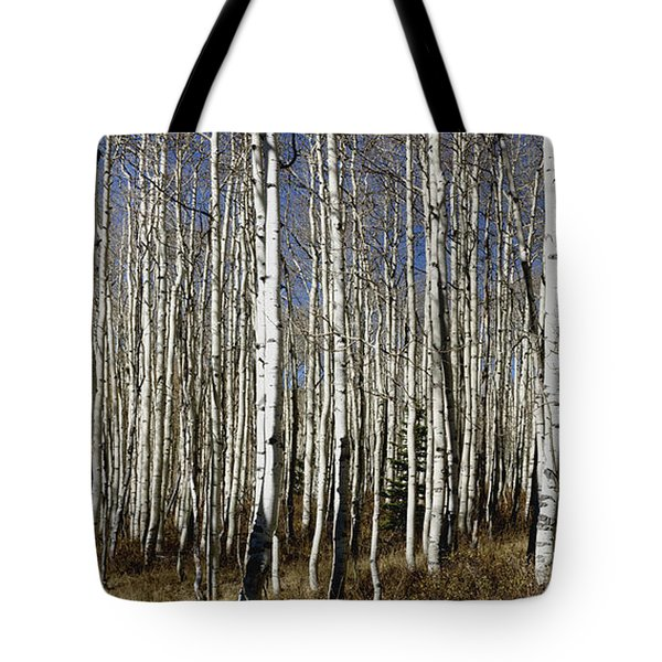 Fall Quaking Aspens Panorama Tote Bag