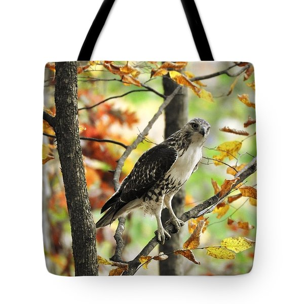 Fall Red-tailed Hawk Tote Bag