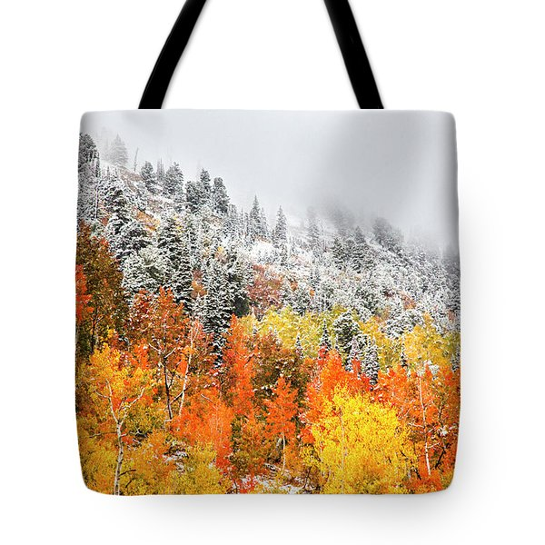 Fall To Winter Canvas Print, Photographic Print, Art Print, Framed Print, Greeting Card, Iphone Case Tote Bag