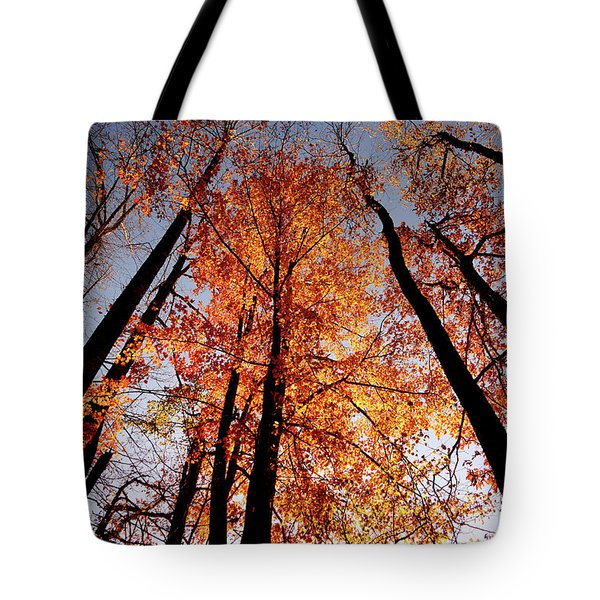 Fall Trees Sky Tote Bag by Meta Gatschenberger