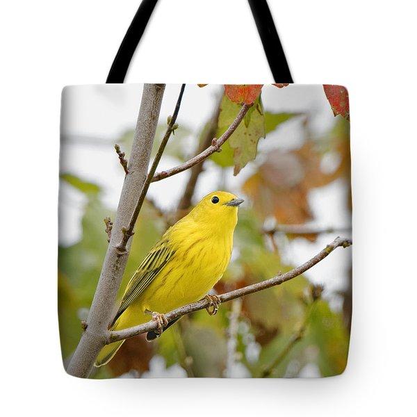 Fall Warbler Tote Bag