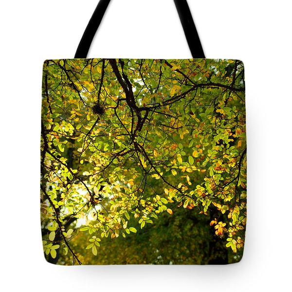 Fall's Unique Light Tote Bag by Karen Musick
