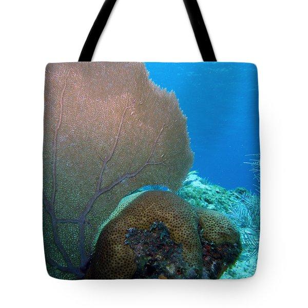 Fan Vs. Brain Tote Bag by Kimberly Mohlenhoff
