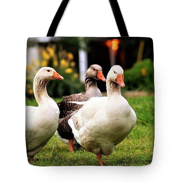 Farm Geese Tote Bag