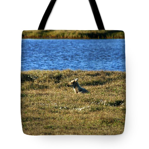 Fawn Caribou Tote Bag by Anthony Jones