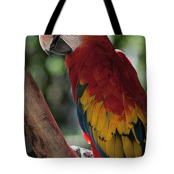 Feathered Rainbow Tote Bag