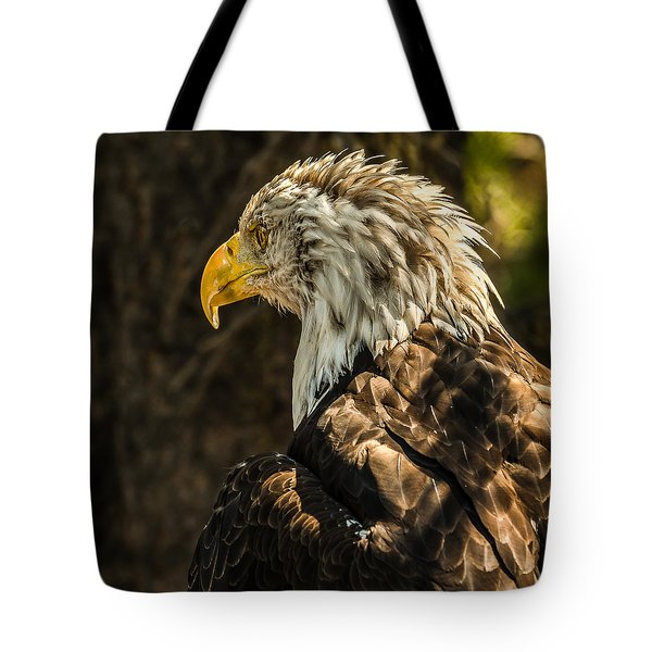 Tote Bag featuring the photograph Feathers In Light by Yeates Photography
