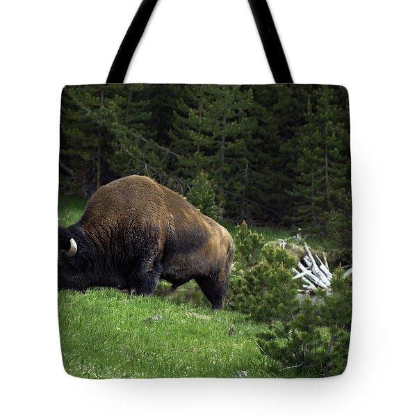 Tote Bag featuring the photograph Feeding Buffalo by Jason Moynihan