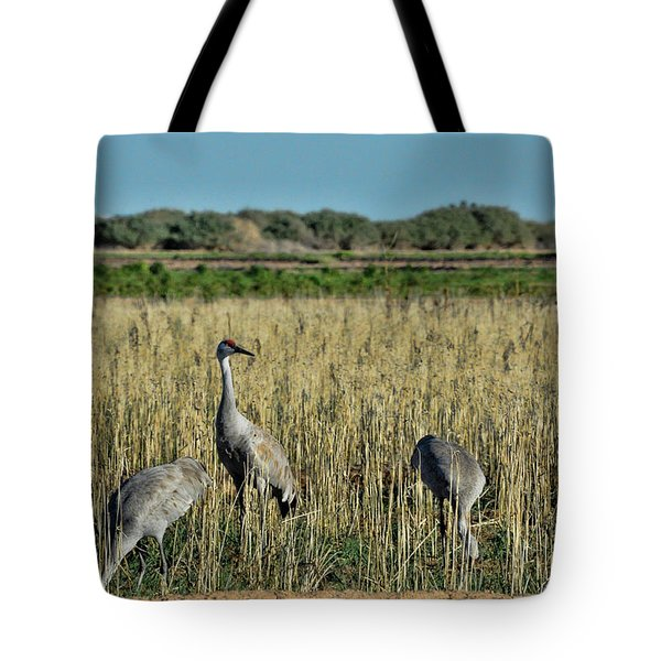 Feeding Greater Sandhill Cranes Tote Bag by Daniel Hebard