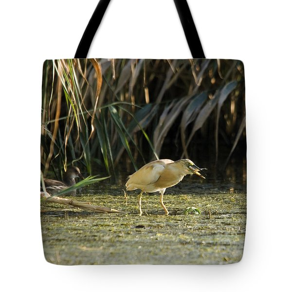 Feeding Squacco Heron Tote Bag