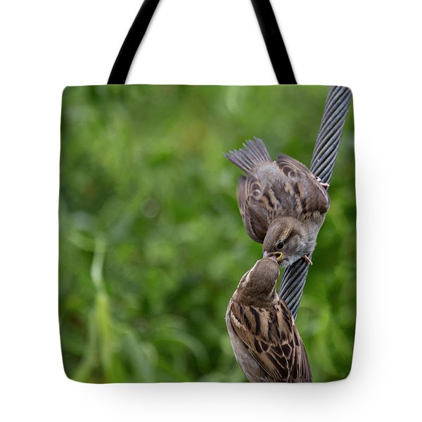 Tote Bag featuring the photograph Feeding Time by Brian Roscorla