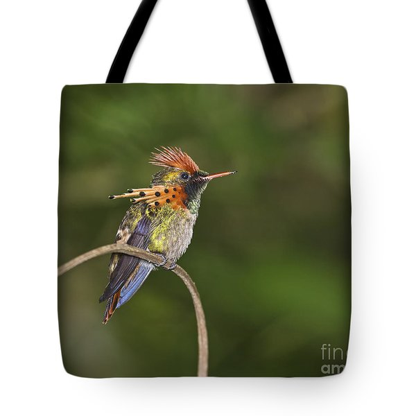 Feisty Little Fellow..  Tote Bag