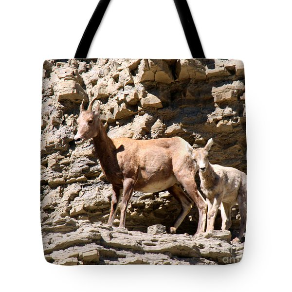 Female Bighorn Sheep With Juvenile Tote Bag
