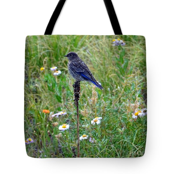 Tote Bag featuring the photograph Female Bluebird by Dorrene BrownButterfield