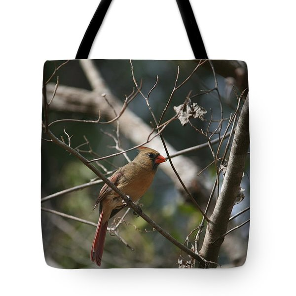 Female Cardinal 3 Tote Bag by Cathy Harper