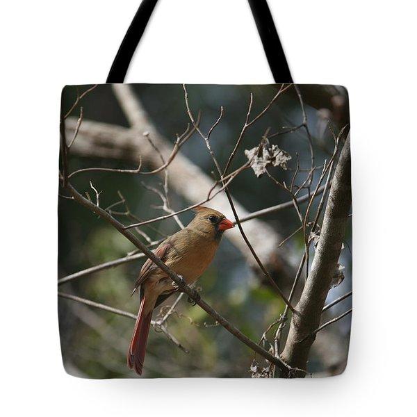Female Cardinal 3 Tote Bag