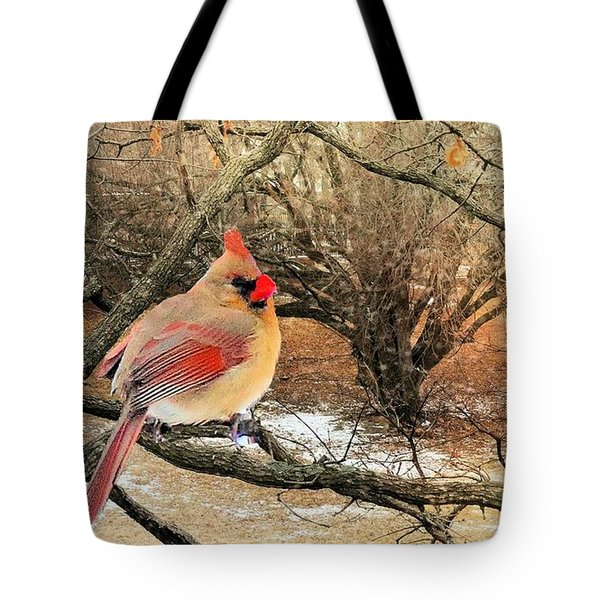 Female Cardinal Caught In The Snow Tote Bag