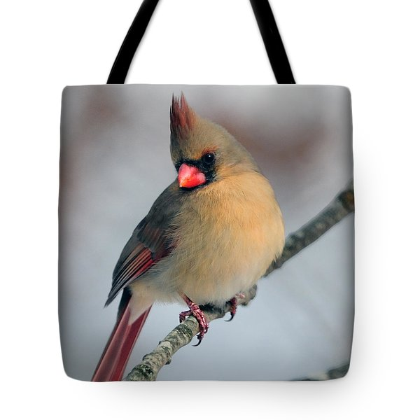Female Cardinal Tote Bag by Diane Giurco