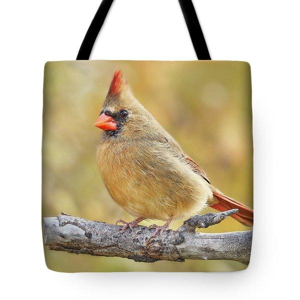 Female Cardinal In Minnesota Autumn Tote Bag
