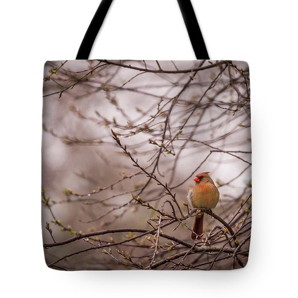 Tote Bag featuring the photograph Female Cardinal In Spring 2017 by Terry DeLuco