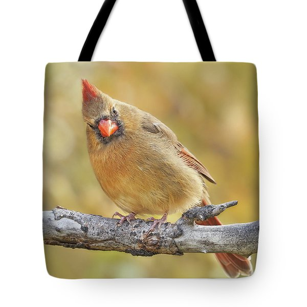 Female Cardinal Is Not Impressed Tote Bag