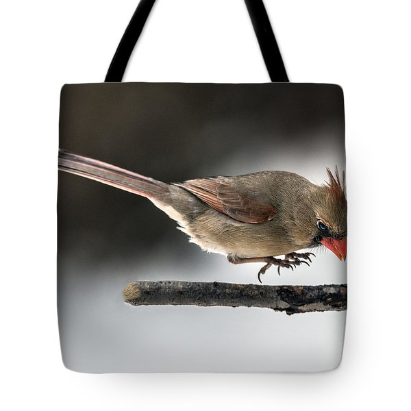 Female Cardinal Landing On Branch Tote Bag