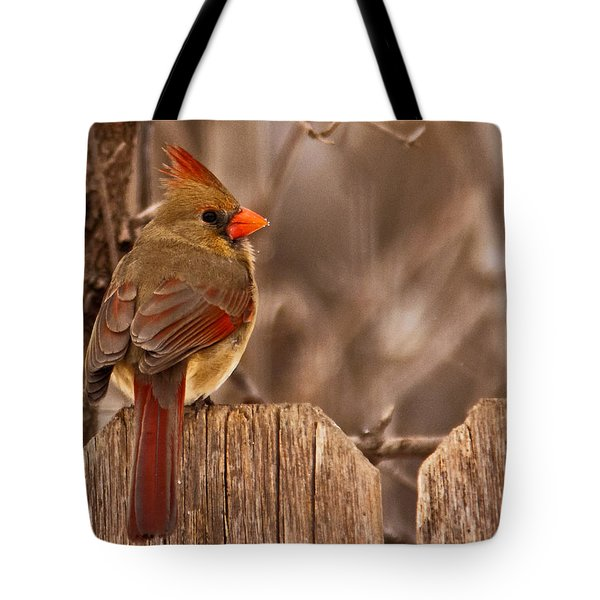 Female Cardinal On The Fence Tote Bag