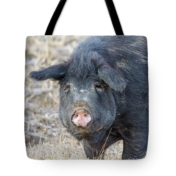 Tote Bag featuring the photograph Female Hog by James BO Insogna