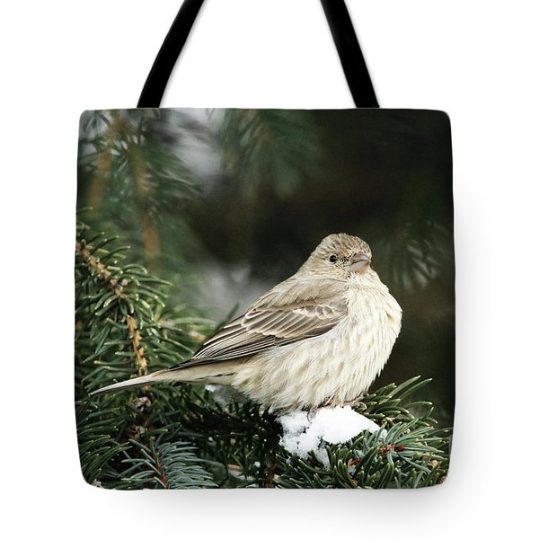 Female House Finch On Snow Tote Bag